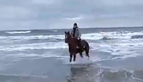 Анапчанин верхом на коне зашел в холодное февральское море