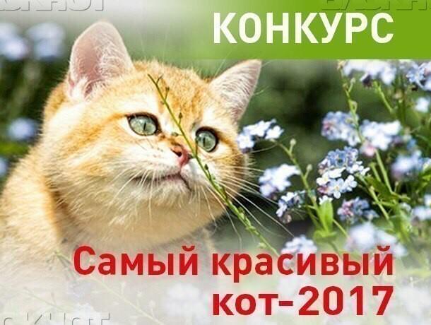 Завершилось голосование в конкурсе «Самый красивый кот-2017»