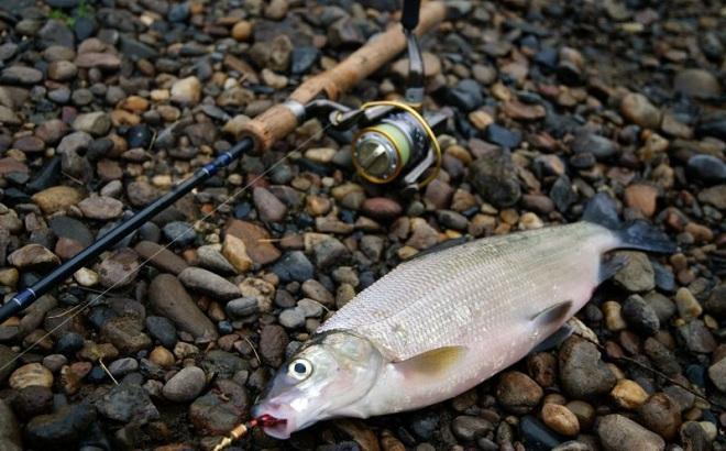 В соседнем с Анапой городе прокуратура нашла более 4000 незаконных орудий для лова рыбы