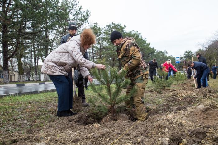 100 сосен прибавилось в зелёном наряде на Пионерском проспекте в Анапе
