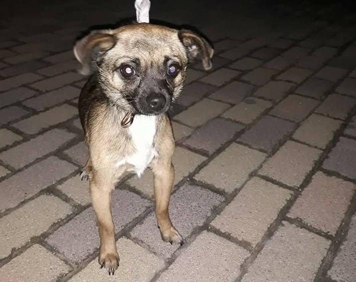 В Анапе найдена очередная «потеряшка»: собака нуждается в любви и заботе