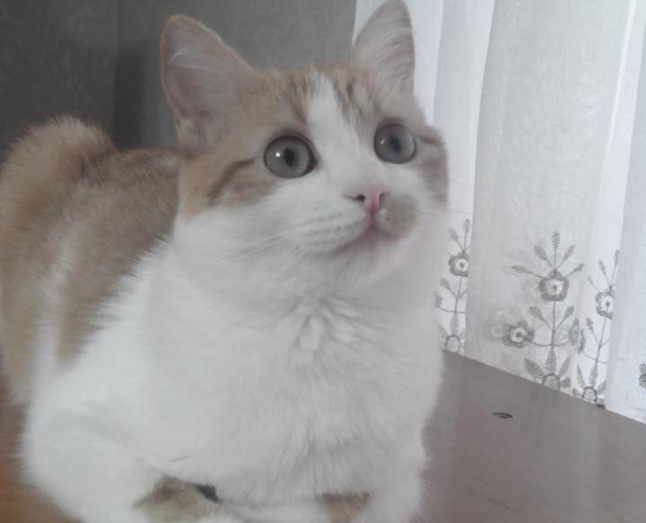 Любознательная кошка Нюша принимает участие в конкурсе «Мартовские коты»
