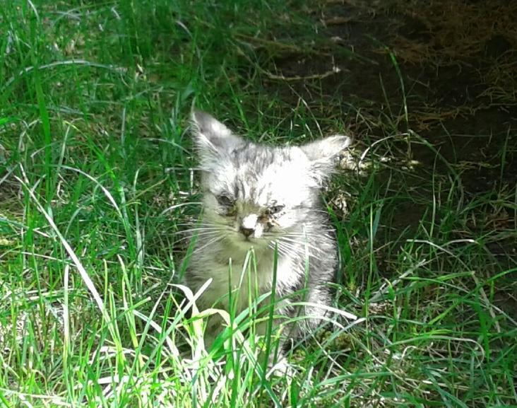 В Анапе два маленьких котёнка, которых выбросили на улицу, ищут любящих хозяев