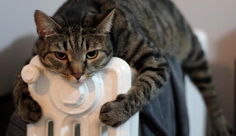 «Горячая линия» приведёт тепло в анапские дома