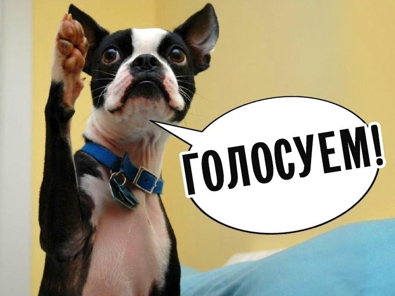 Завтра, 19 июня начнется голосование в конкурсе «Собака – друг человека»