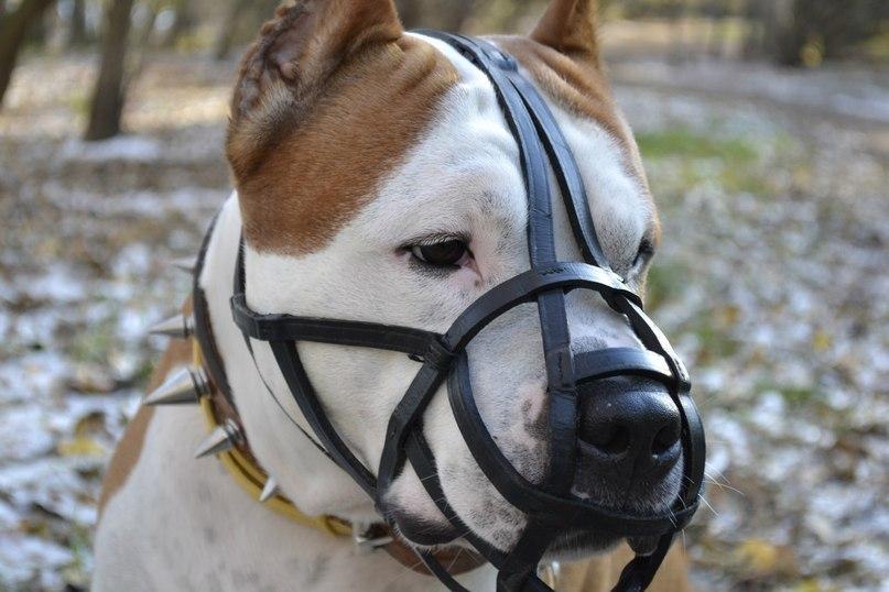 В Анапе любителей собак крупных пород обяжут соблюдать новый закон!