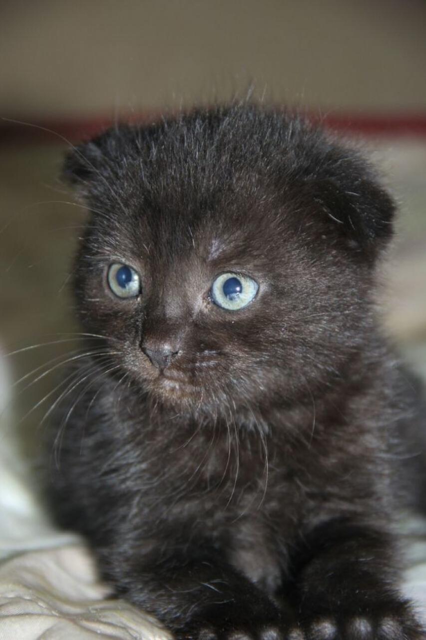 14 мая в 18.00 заканчивается прием заявок на конкурс «Самый красивый кот-2017»