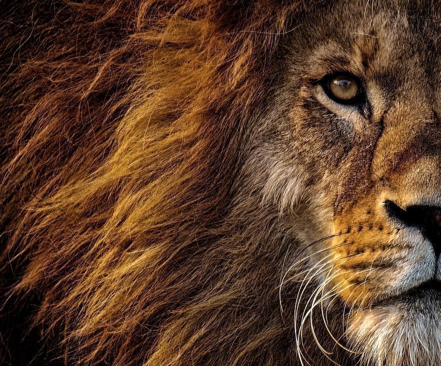 Анапский прокурор в суде бился за африканских львов