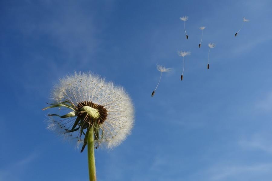 Сегодня, 18 августа, в Анапе ветрено и очень жарко