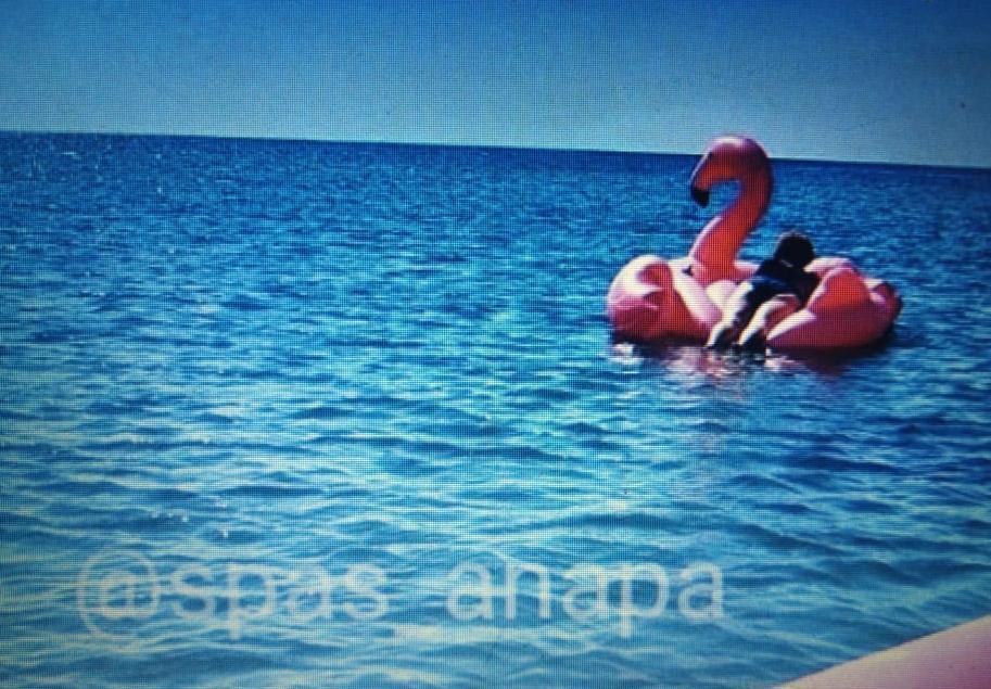 Сегодня недалеко от Анапы спасателям пришлось гнаться в море за фламинго, спасая его