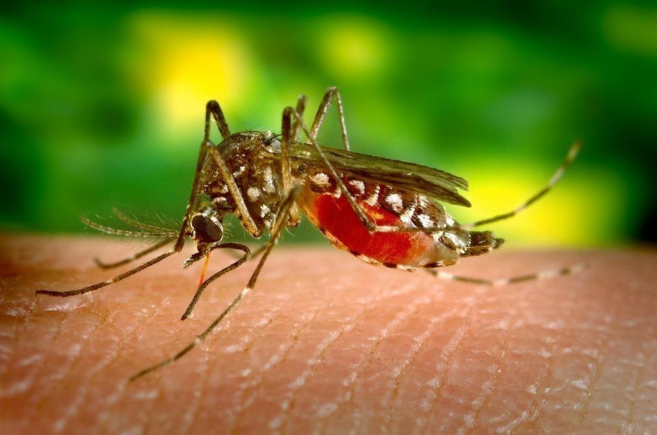 В Анапе готовы потратить 6,5 миллионов рублей на борьбу с комарами