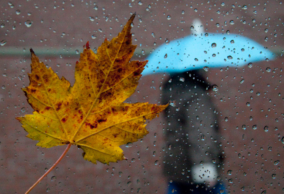 В четверг, 15 ноября, в Анапе целый день будет идти дождь