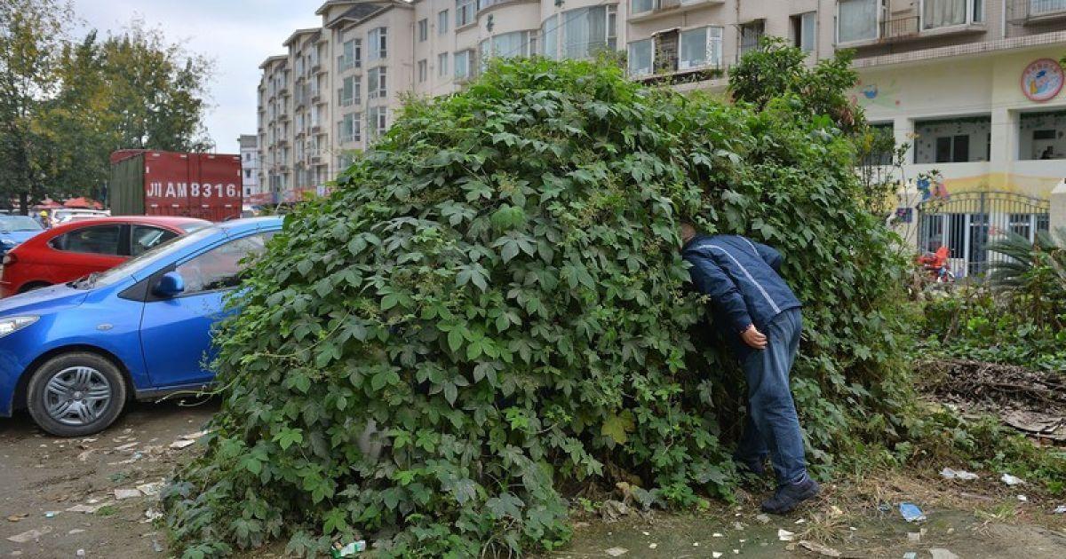 Мужчину из Анапы, пожелавшего справить нужду в общественном месте, назвали «зайкой»