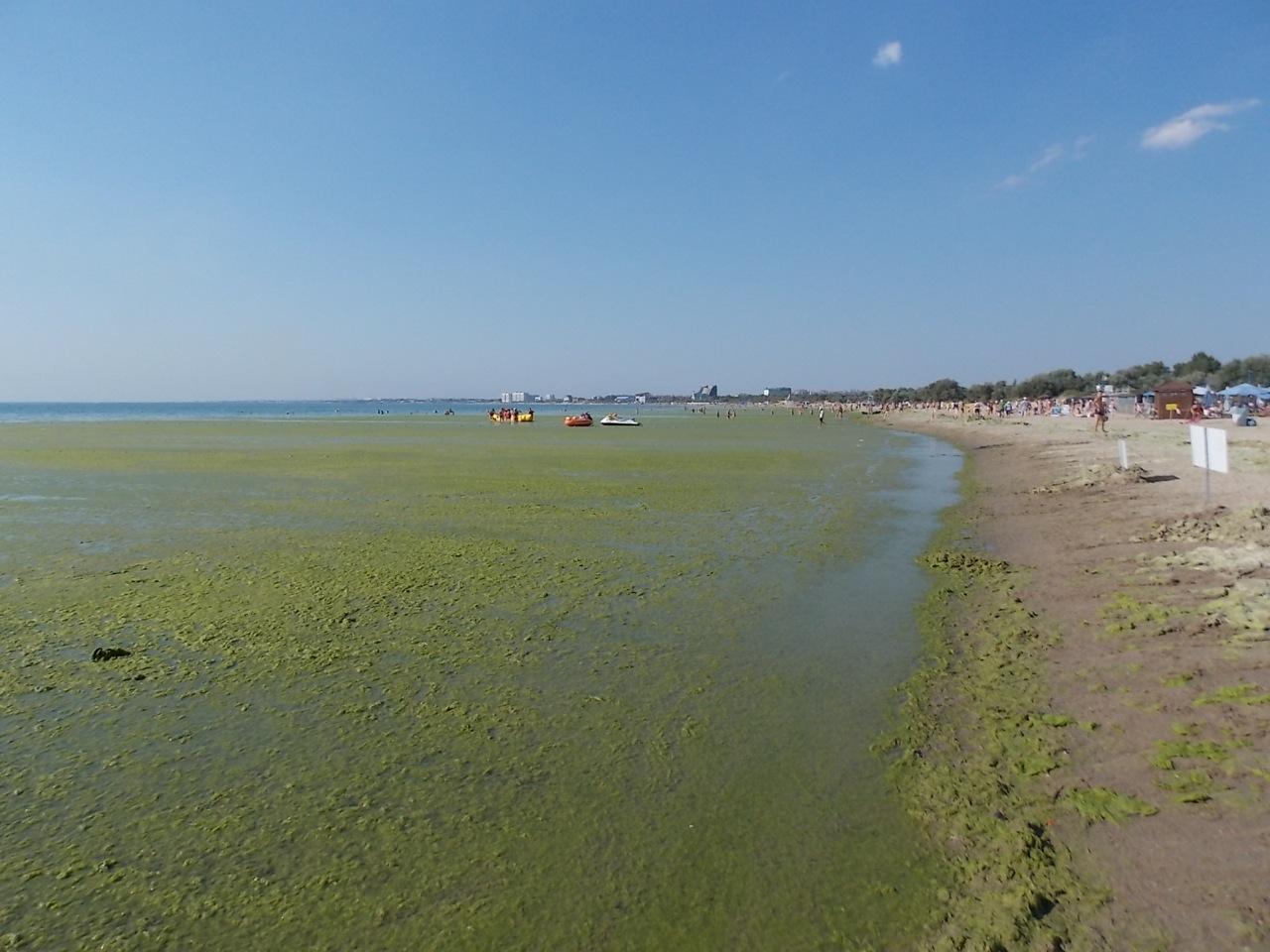 Начальник Роспотребнадзора считает, что море в Анапе в порядке и из-за него никто не болеет