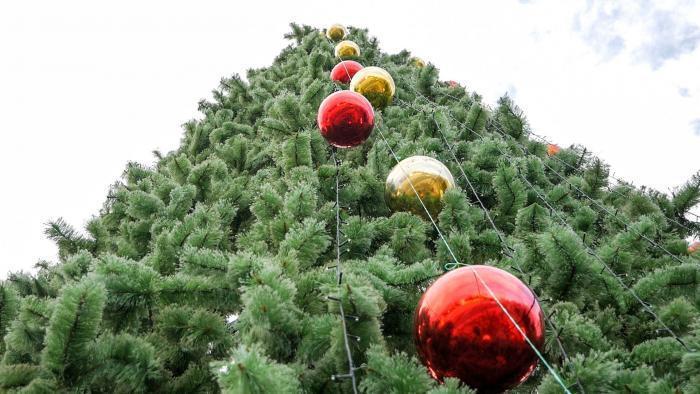 В Анапу из Москвы везут 22-метровую ёлку